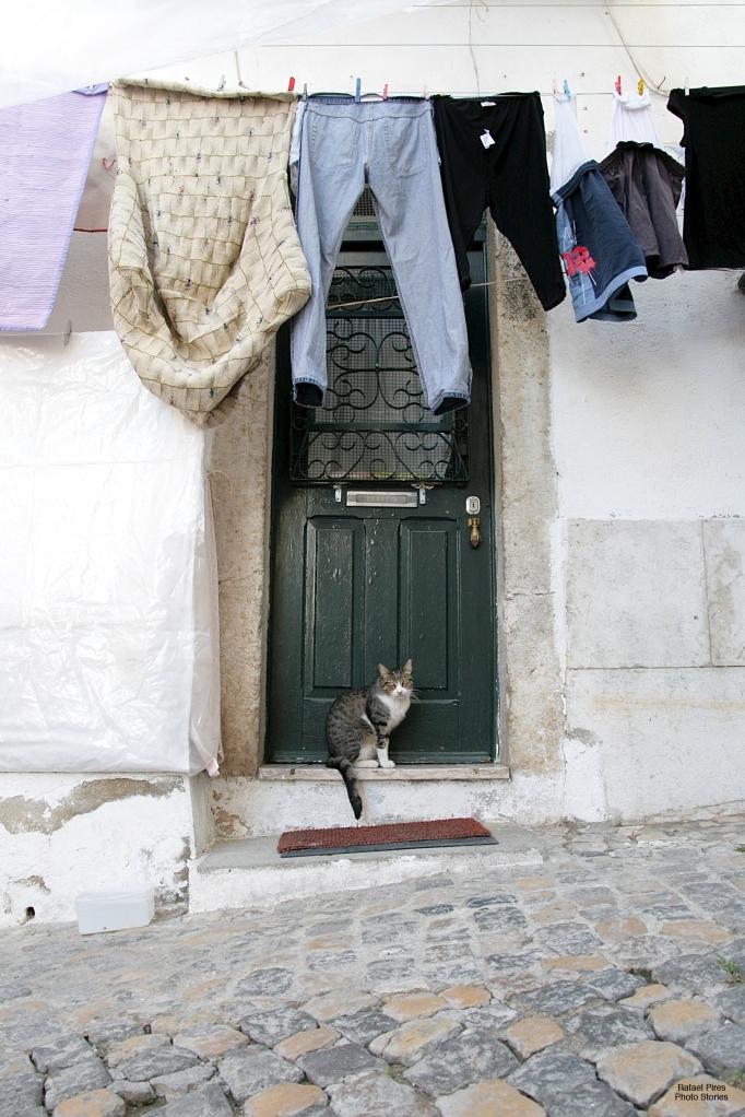 House guardian